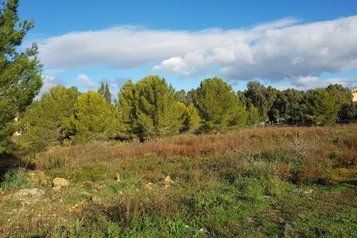 Terrain à Santa Ponsa