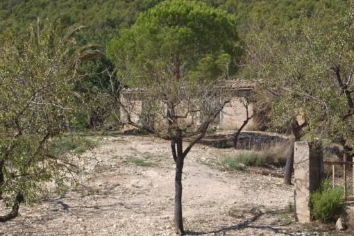 Terrain à Capdella