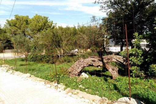 Terrain à Portol - Puntiro