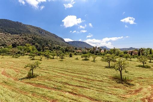 Unique landscape views from the plot