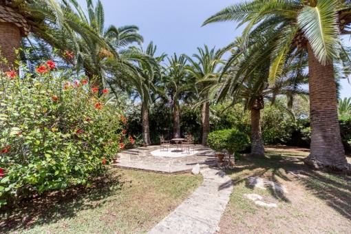 Sunny palm garden