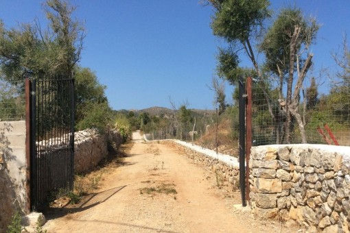 15,660 sqm building plot near Arta with a valid buildng licence.