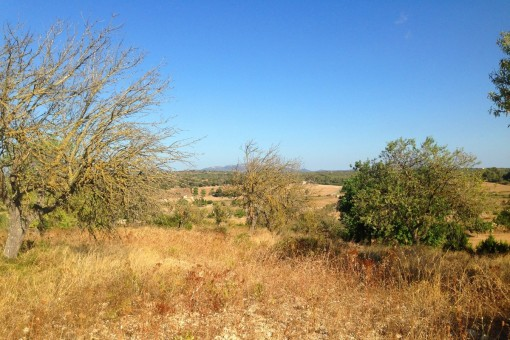 Terrain à Santa Margalida