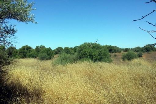 Terrain à Campos
