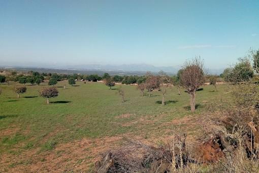 Terrain à San Lorenzo