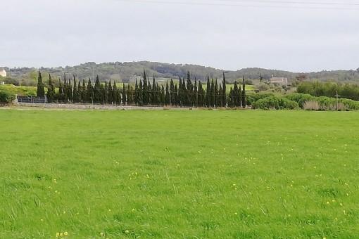 Terrain à Lloret de Vista Alegre