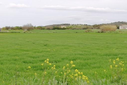 Terrain à Sant Joan