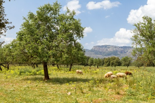 Very beautiful building plot at the foot of the Tramuntana mountains