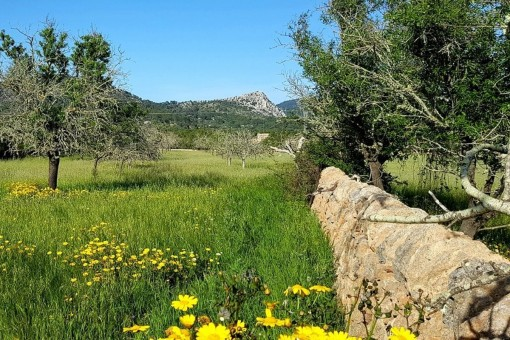 Wonderful building plot with spectacular views of the massive Randa in Llucmajor