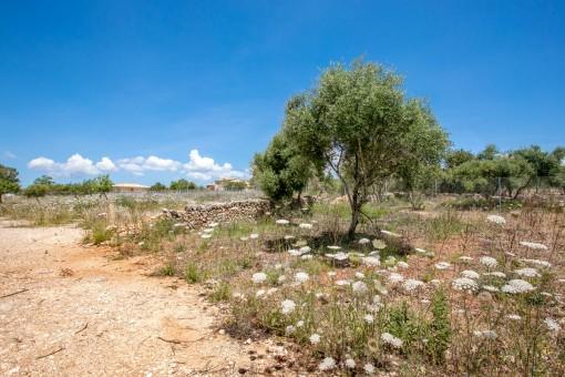 Terrain à Sa Cabaneta - Marratxi