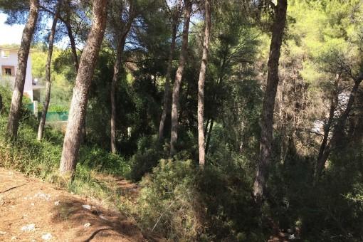 Terrain à Cala Vinyas