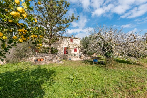 Lovely compact finca requiring renovation near to the beach in Manacor