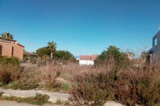 Terrain à Colonia de San Pedro