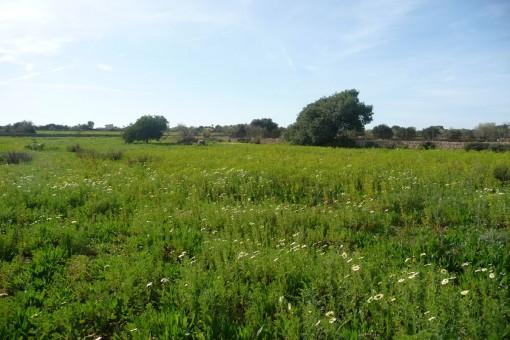 Terrain à Santanyi
