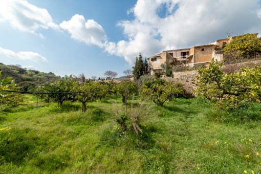 Village-house with a large orchard in Alaro requiring renovation